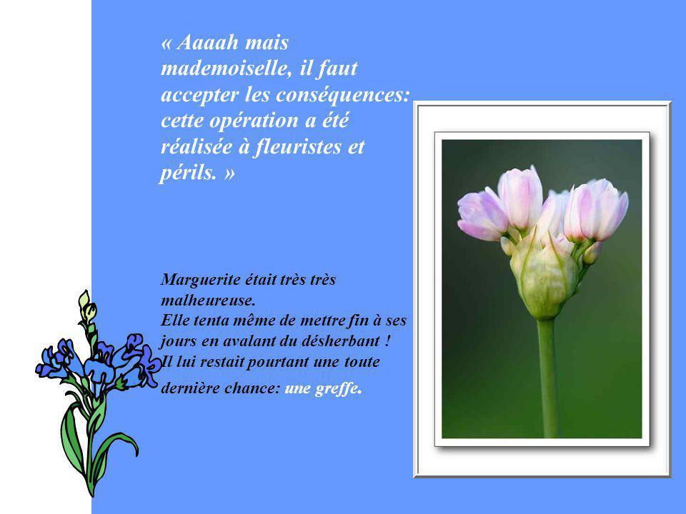 « Aaaah mais mademoiselle, il faut accepter les conséquences: cette opération a été réalisée à fleuristes et périls. » Marguerite était très très malh