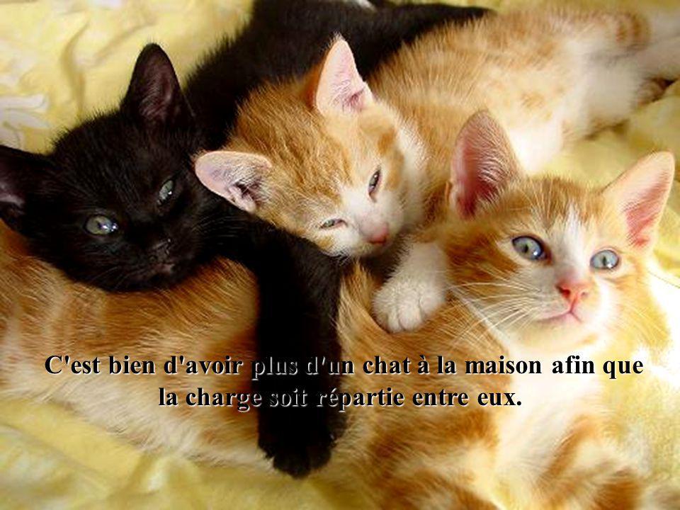 Quand ils dorment, le corps des chats se libère de la négativité quil a éliminée en nous et quil a pris sur lui…..