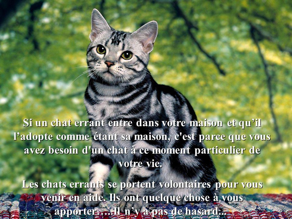 Si quelqu un vient à la maison et que les chats sentent que cette personne est malveillante, les chats nous entourent afin de nous mettre en garde et nous protéger..