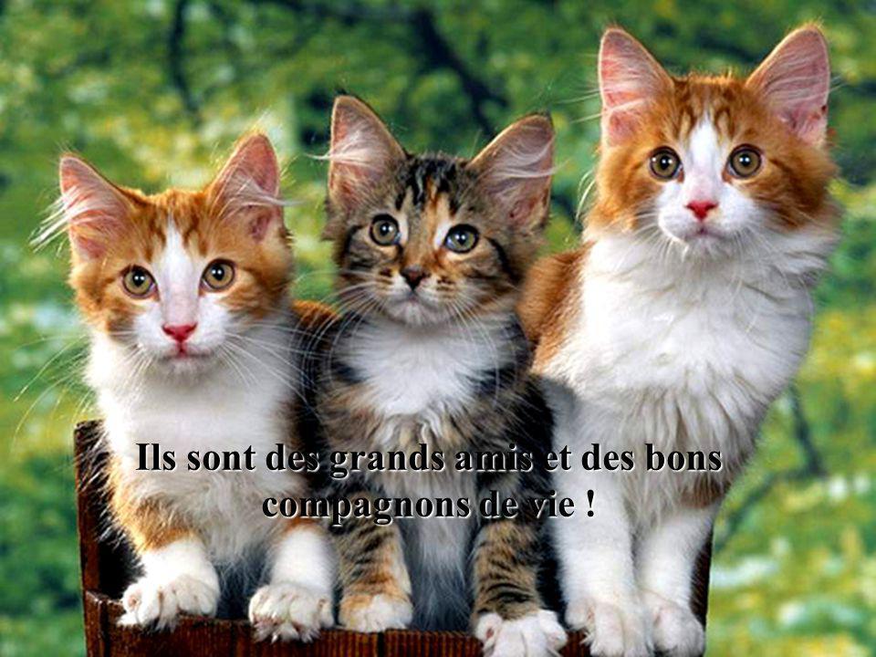 Ils sont doux, affectueux et fidèles pour peu quon les respecte !