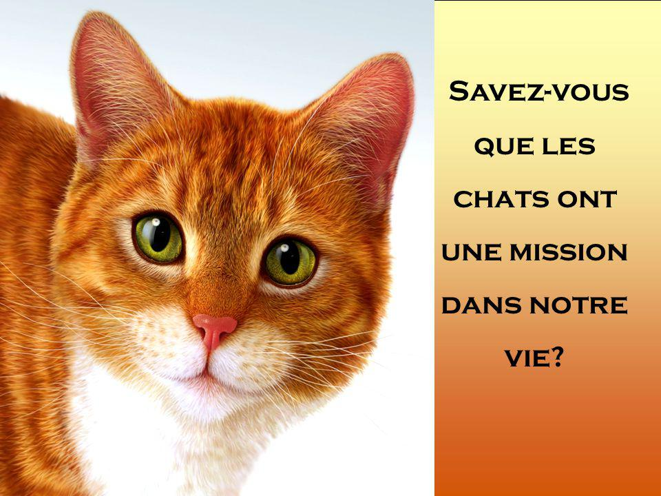 LA MISSION DES CHATS