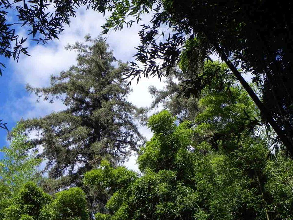 Le gigantisme de la végétation… …et létonnante variété des espèces sont un régal pour les sens
