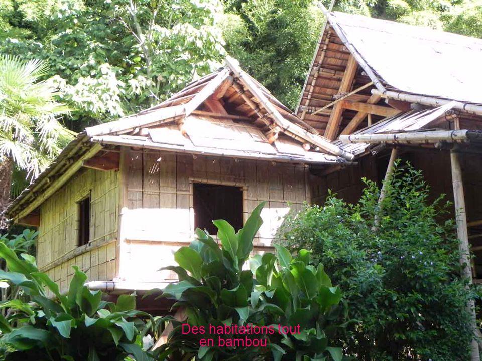 Le bambou, comment cest fait ?