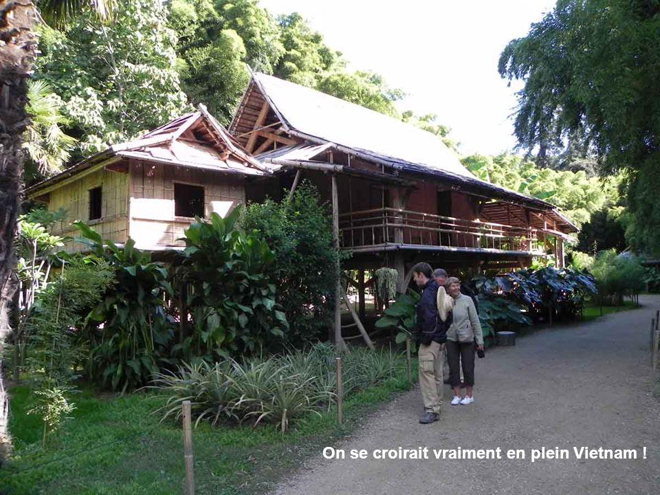 Des habitations tout en bambou