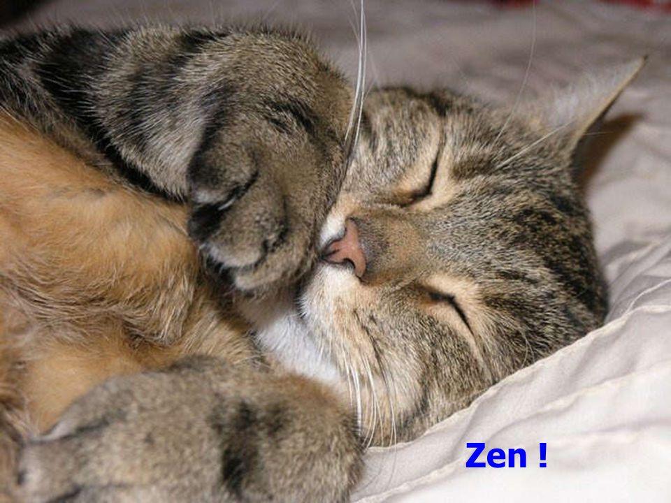 Zen !