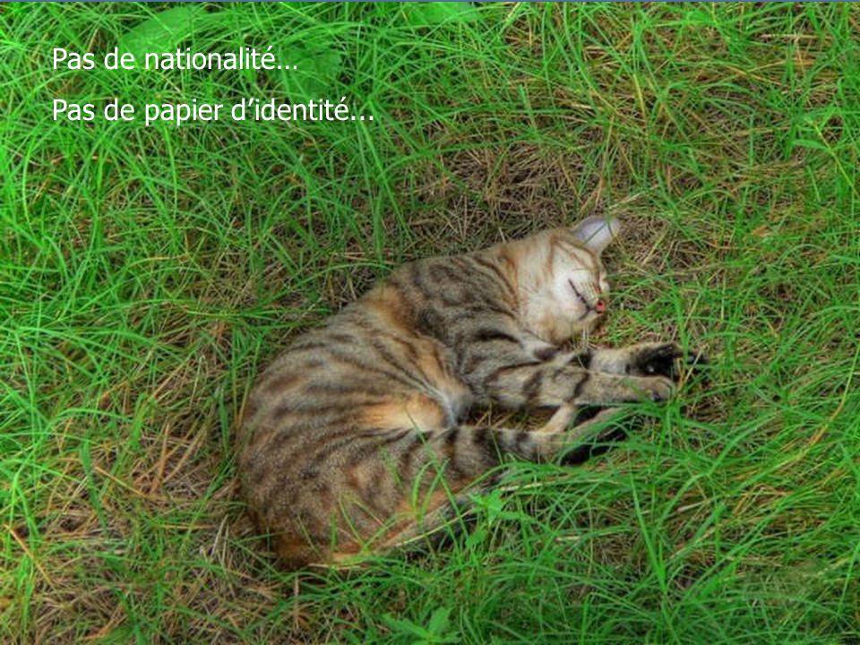Pas de nationalité… Pas de papier didentité...