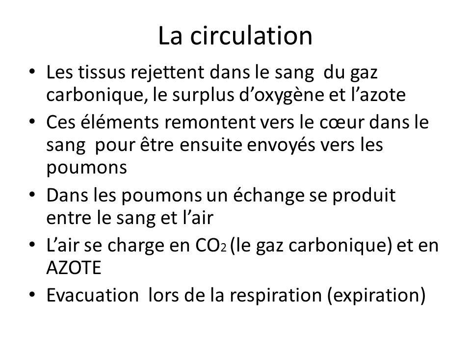 La circulation Les tissus rejettent dans le sang du gaz carbonique, le surplus doxygène et lazote Ces éléments remontent vers le cœur dans le sang pou