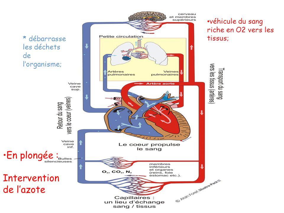 * débarrasse les déchets de lorganisme; En plongée : Intervention de lazote véhicule du sang riche en O2 vers les tissus;
