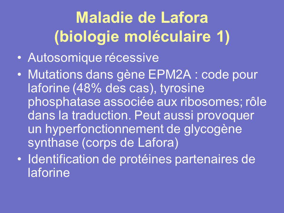 Maladie de Lafora (biologie moléculaire 1) Autosomique récessive Mutations dans gène EPM2A : code pour laforine (48% des cas), tyrosine phosphatase as