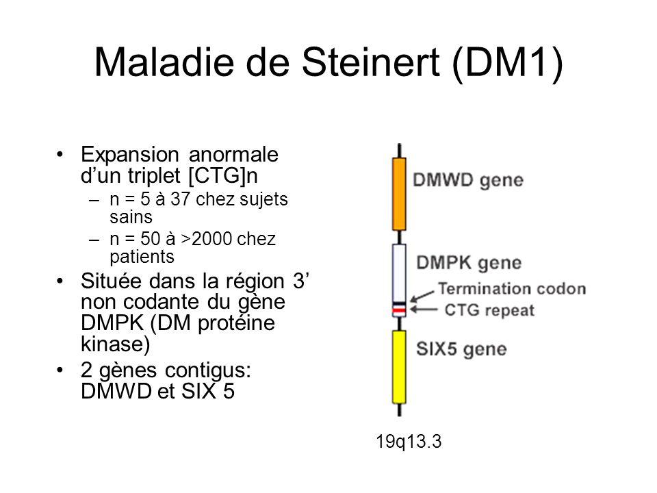 DM 1 (Steinert)DM 2 (PROMM) EpidémiologieQuasi-universelleSurtout en Europe Age de débutTout âgeAdolescence à adulte tardif Anticipation+- Forme congénitale+- Faiblesse Faciale Proximale Distale + ++ +/- ++ + Myalgies-+ Hypertrophie mollets - + Cataracte++ Calvitie++ Troubles cardiaques+++ Hypogonadisme++ Hyperglycémie++ Hypersomnie diurne++ Myotonie à l EMG+++ Retard mental+- Locus19q13.33q21 Gène mutéDMPKZNF9 ExpansionTriplets CTGQuadruplets CCTG Taille expansion50 à 4 00075 à 11 000 (moyenne 5 000)
