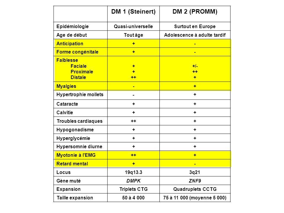 DM 1 (Steinert)DM 2 (PROMM) EpidémiologieQuasi-universelleSurtout en Europe Age de débutTout âgeAdolescence à adulte tardif Anticipation+- Forme congé