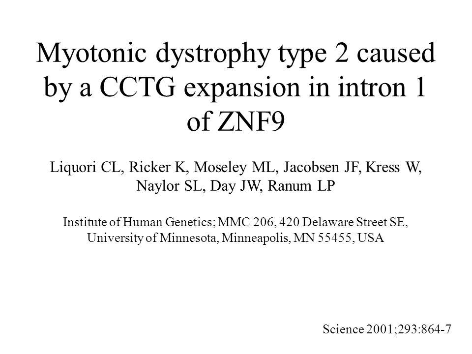 Aspects génétiques Locus DM2 en 3q21 Expansion quadruplet CCTG dans intron 1 gène ZNF9 –Allèles sains (TG) 14-25 (TCTG) 4-10 (CCTG) 11-26 Dernière portion interrompue par des tétranucléotides –Allèles porteurs de la mutation DM2 Nombre moyen répétitions CCGT: 5 000 (75 - 11 000) Perte des interruptions (prémutation) Instabilité somatique de l expansion Variation intergénérationnelle –Pas de phénomène d anticipation –(CCTG)n enfant < (CCTG)n parent (père ou mère) Corrélation positive entre taille expansion et âge début