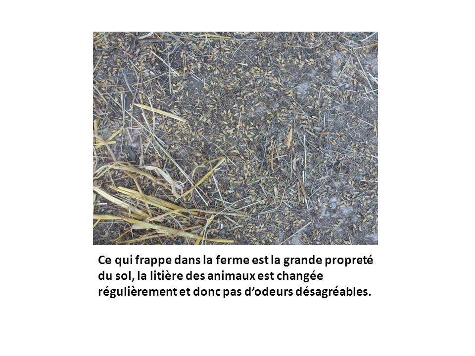 Ce qui frappe dans la ferme est la grande propreté du sol, la litière des animaux est changée régulièrement et donc pas dodeurs désagréables.