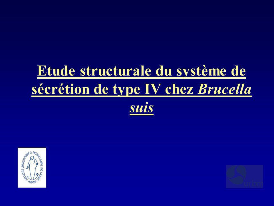 Etude structurale du système de sécrétion de type IV chez Brucella suis