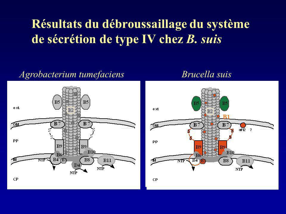 Résultats du débroussaillage du système de sécrétion de type IV chez B. suis Agrobacterium tumefaciensBrucella suis B1