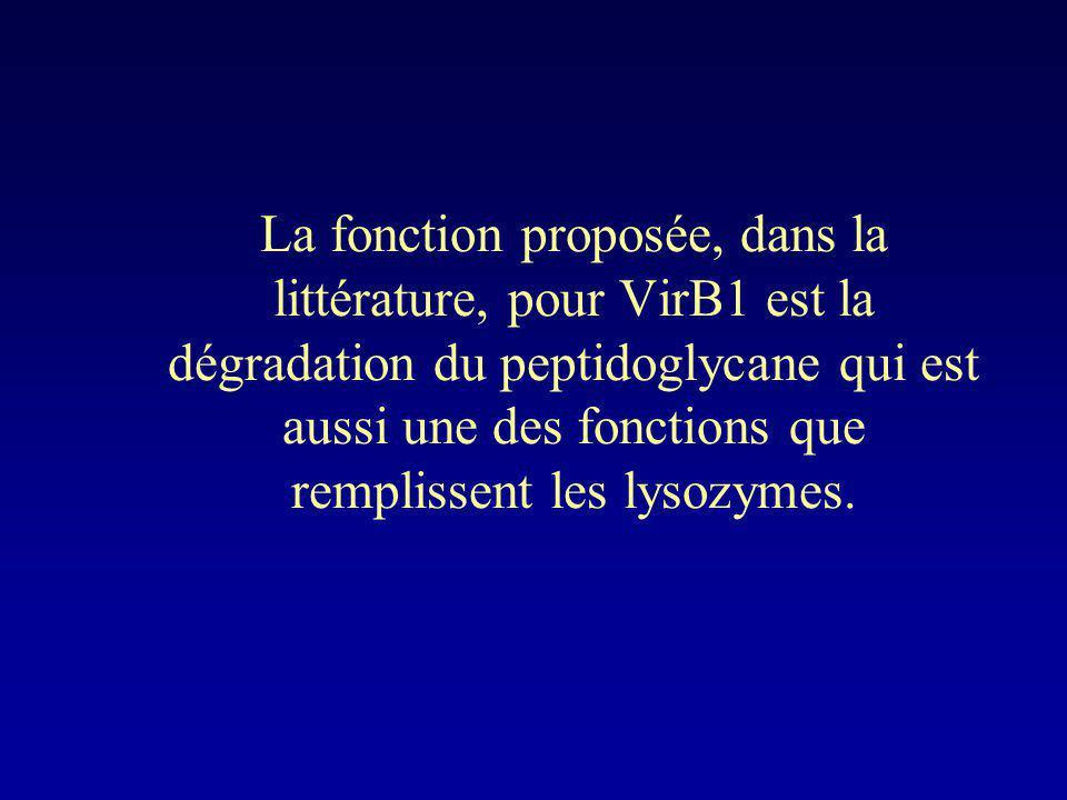 La fonction proposée, dans la littérature, pour VirB1 est la dégradation du peptidoglycane qui est aussi une des fonctions que remplissent les lysozym