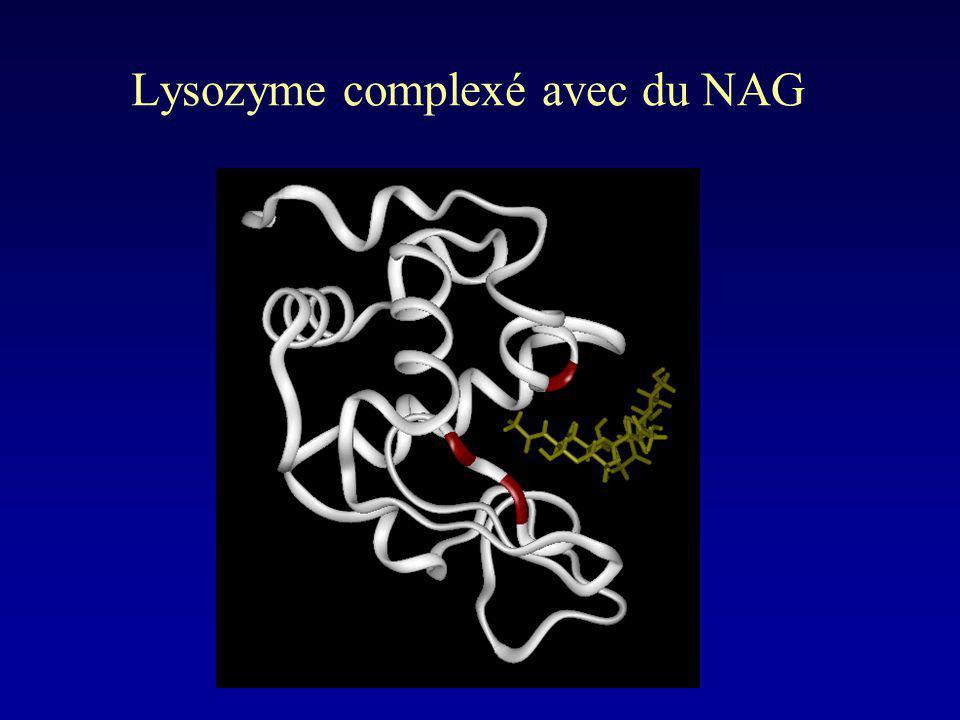 Lysozyme complexé avec du NAG