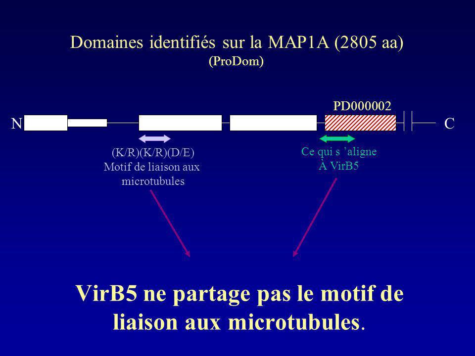 VirB5 ne partage pas le motif de liaison aux microtubules. Domaines identifiés sur la MAP1A (2805 aa) (ProDom) PD000002 (K/R)(K/R)(D/E) Motif de liais