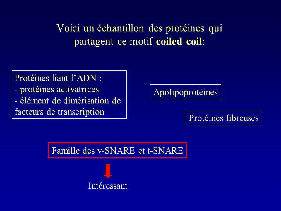 Voici un échantillon des protéines qui partagent ce motif coiled coil: Protéines liant lADN : - protéines activatrices - élément de dimérisation de fa