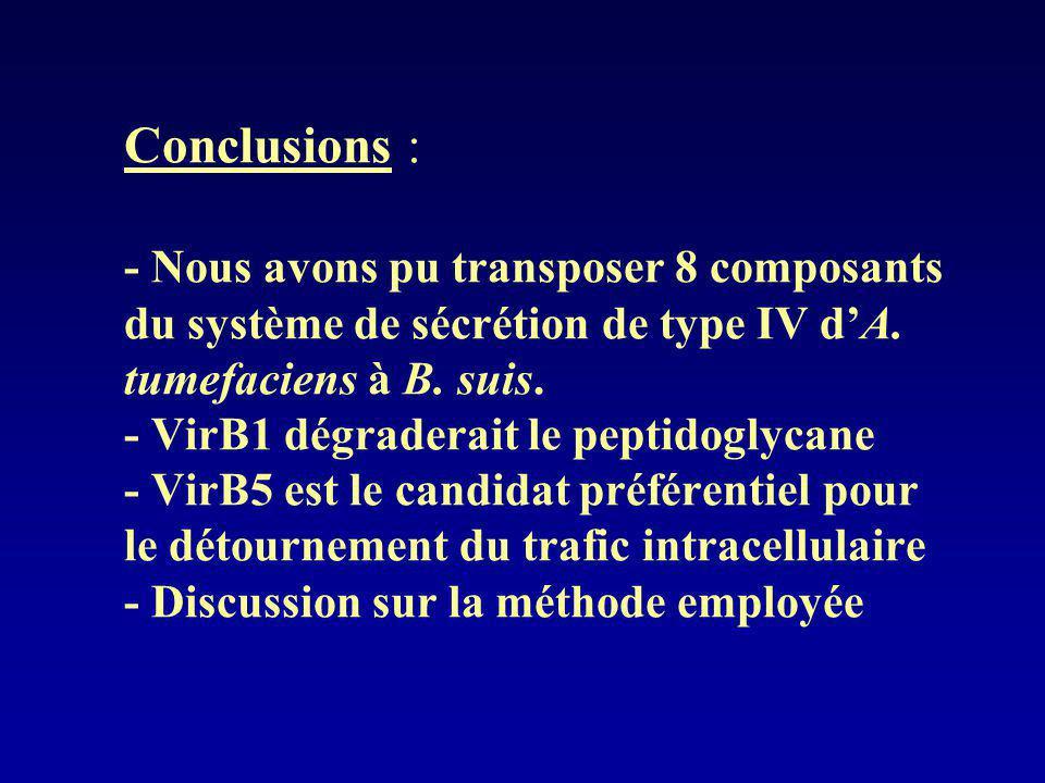 Conclusions : - Nous avons pu transposer 8 composants du système de sécrétion de type IV dA. tumefaciens à B. suis. - VirB1 dégraderait le peptidoglyc