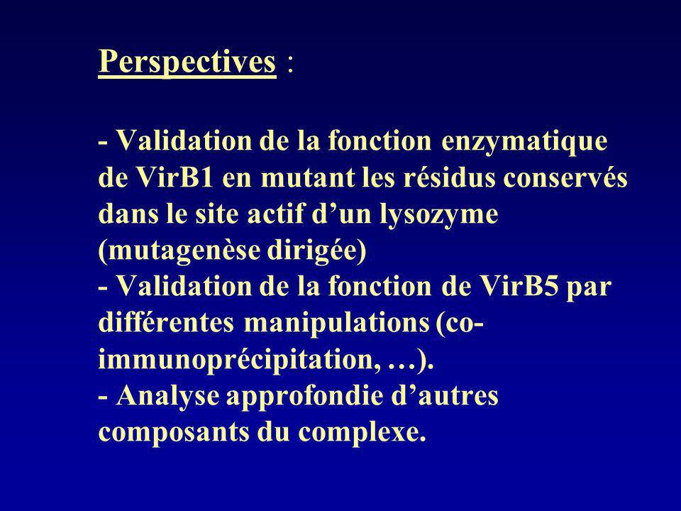 Perspectives : - Validation de la fonction enzymatique de VirB1 en mutant les résidus conservés dans le site actif dun lysozyme (mutagenèse dirigée) -