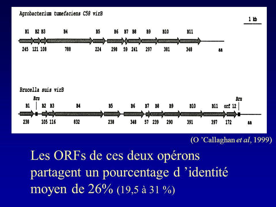 Les ORFs de ces deux opérons partagent un pourcentage d identité moyen de 26% (19,5 à 31 %) (O Callaghan et al, 1999)