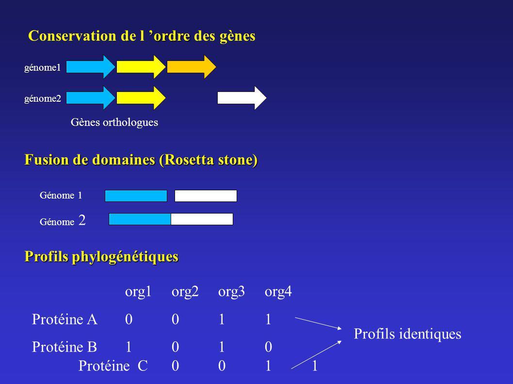 ordre Conservation de l ordre des gènes génome1 génome2 Gènes orthologues Fusion de domaines (Rosetta stone) Profils phylogénétiques org1org2org3org4
