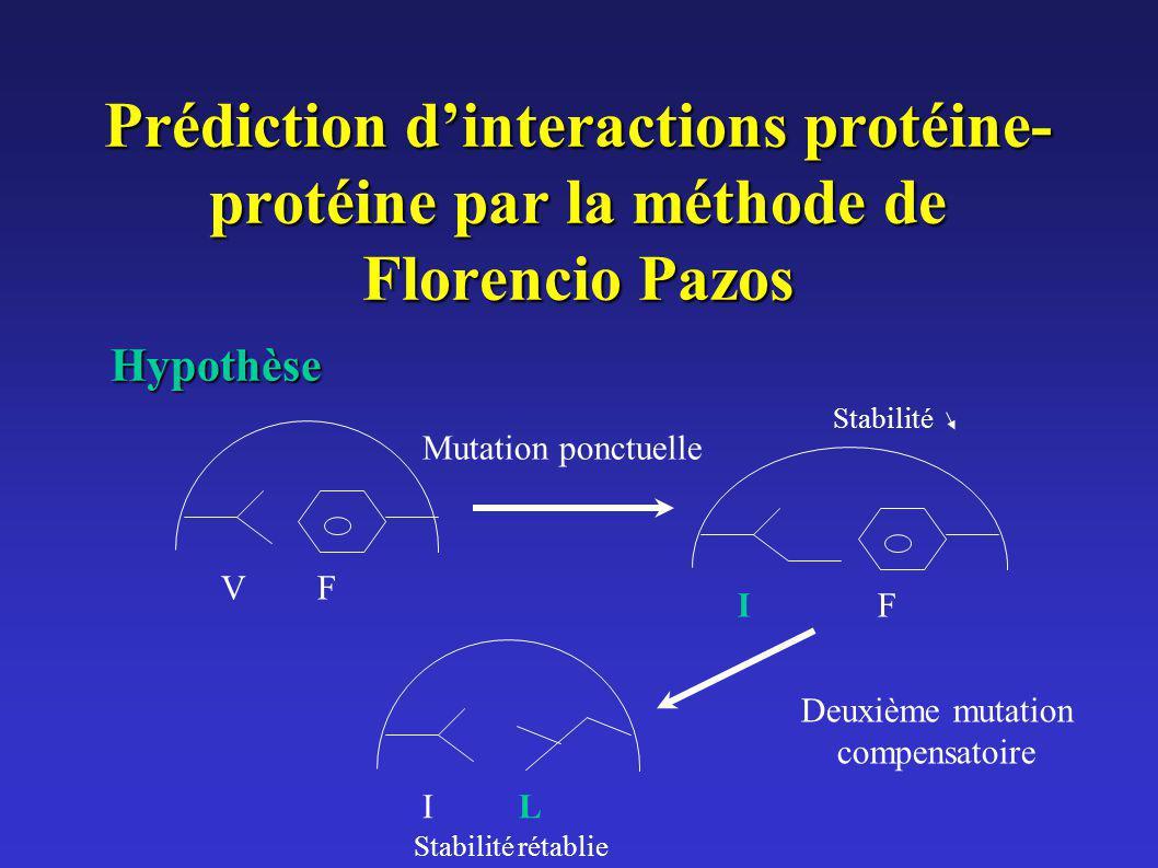 Prédiction dinteractions protéine- protéine par la méthode de Florencio Pazos Hypothèse VF IF Mutation ponctuelle IL Deuxième mutation compensatoire S