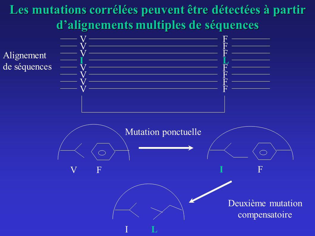 VF VF VF VF VF Mutation ponctuelle IL Deuxième mutation compensatoire VF VF VF IL Alignement de séquences Les mutations corrélées peuvent être détecté