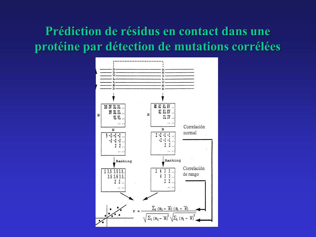 Prédiction de résidus en contact dans une protéine par détection de mutations corrélées
