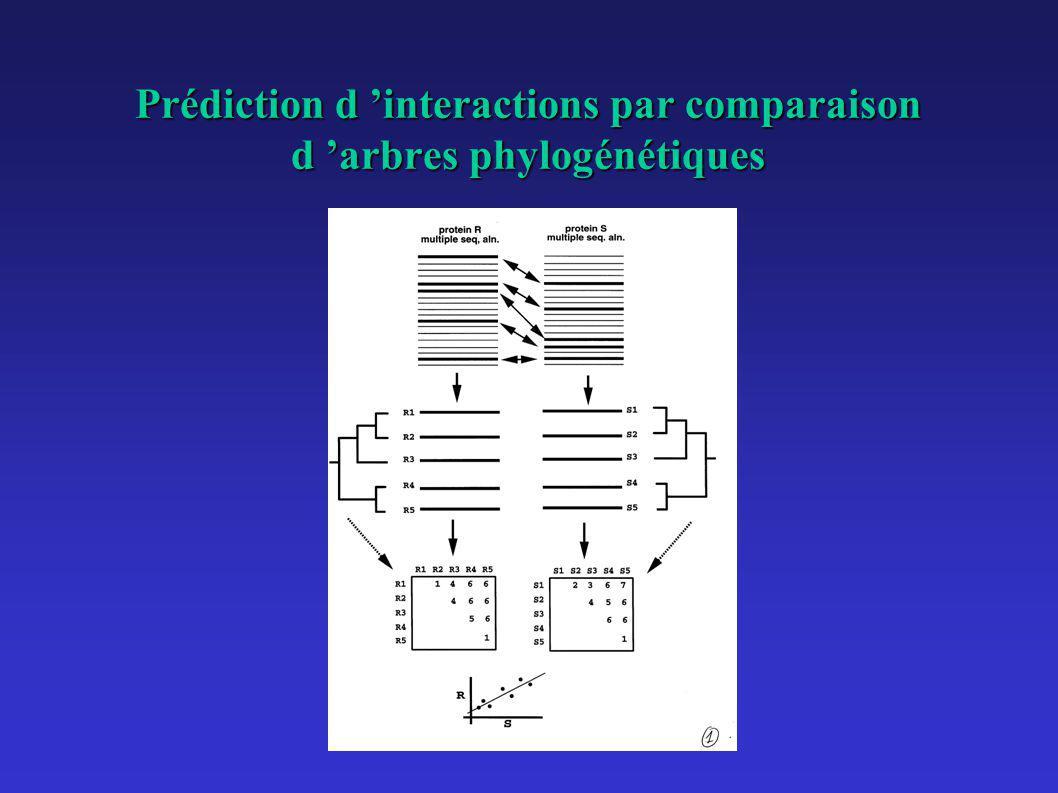 Prédiction d interactions par comparaison d arbres phylogénétiques