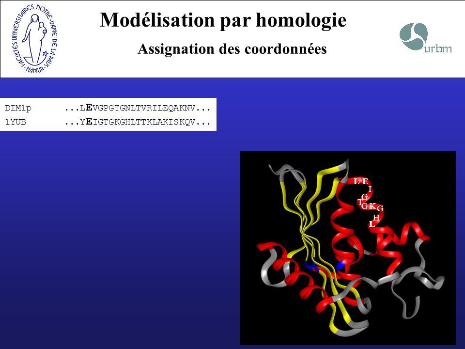DIM1p...L E VGPGTGNLTVRILEQAKNV... 1YUB...Y E IGTGKGHLTTKLAKISKQV... LE I G T GK G H L Modélisation par homologie Assignation des coordonnées