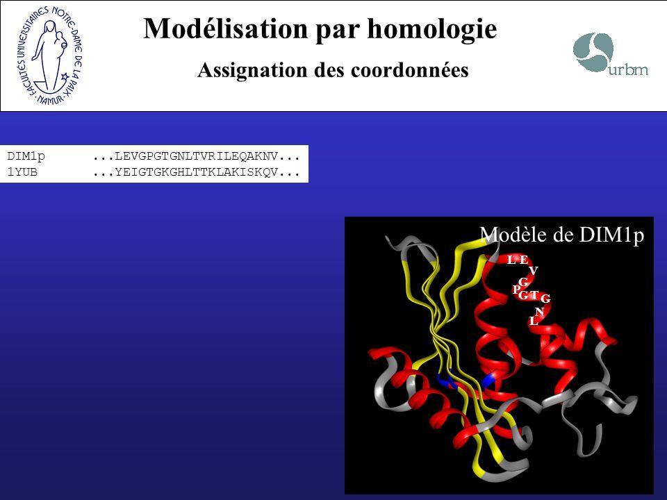 Modélisation par homologie Assignation des coordonnées DIM1p...LEVGPGTGNLTVRILEQAKNV... 1YUB...YEIGTGKGHLTTKLAKISKQV... LE V G P GT G N L Modèle de DI