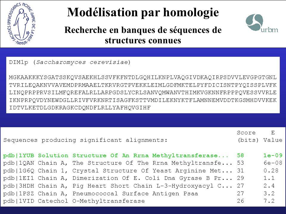 Modélisation par homologie Alignement cible-template DIM1p MGKAAKKKYSGATSSKQVSAEKHLSSVFKFNTDLGQHILKNPLVAQGIVDKAQIRPSDVV 1YUB ---------------------------MNKNIKYSQNFLTSEKVLNQIIKQLNLKETDTV DIM1p LEVGPGTGNLTVRILEQAKNVVAVEMDPRMAAELTKRVRGTPVEKKLEIMLGDFMKTELP 1YUB YEIGTGKGHLTTKLAKISKQVTSIELDSHLFNLSSEKLK---LNTRVTLIHQDILQFQFP ¯¯¯¯¯¯¯¯¯¯¯¯¯¯¯¯¯¯¯¯¯ DIM1p YFD--ICISNTPYQISSPLVFKLINQPRPPRVSILMFQREFALRLLARPGDSLYCRLSAN 1YUB NKQRYKIVGNIPYHLSTQIIKKVVFESRASDI-YLIVEEGFYKRTLD-----IHRTLGLL DIM1p VQMWANVTHIMKVGKNNFRPPPQVESSVVRLEIKNPRPQVDYNEWDGLLRIVFVRKNRTI 1YUB LHTQVSIQQLLKLPAECFHPKPKVNSVLIKLTRHTTDVPDKY--WK--LYTYFVSK---- DIM1p SAGFKSTTVMDILEKNYKTFLAMNNEMVDDTKGSMHDVVKEKIDTVLKETDLGDKRAGKC 1YUB -----------WVNREYRQLFTKN-----------------QFHQAMKHAKVNN--LSTI DIM1p DQNDFLRLLYAFHQVGIHF 1YUB TYEQVLSIFNSYLLFNGR- %id.