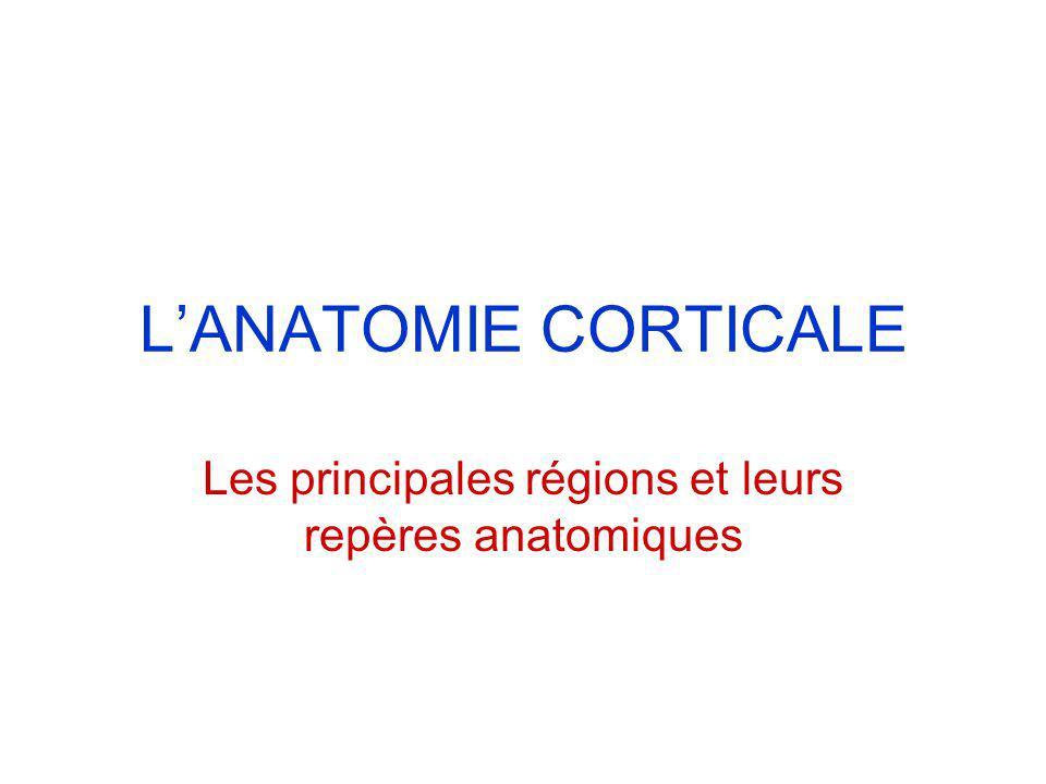 LANATOMIE CORTICALE Les principales régions et leurs repères anatomiques