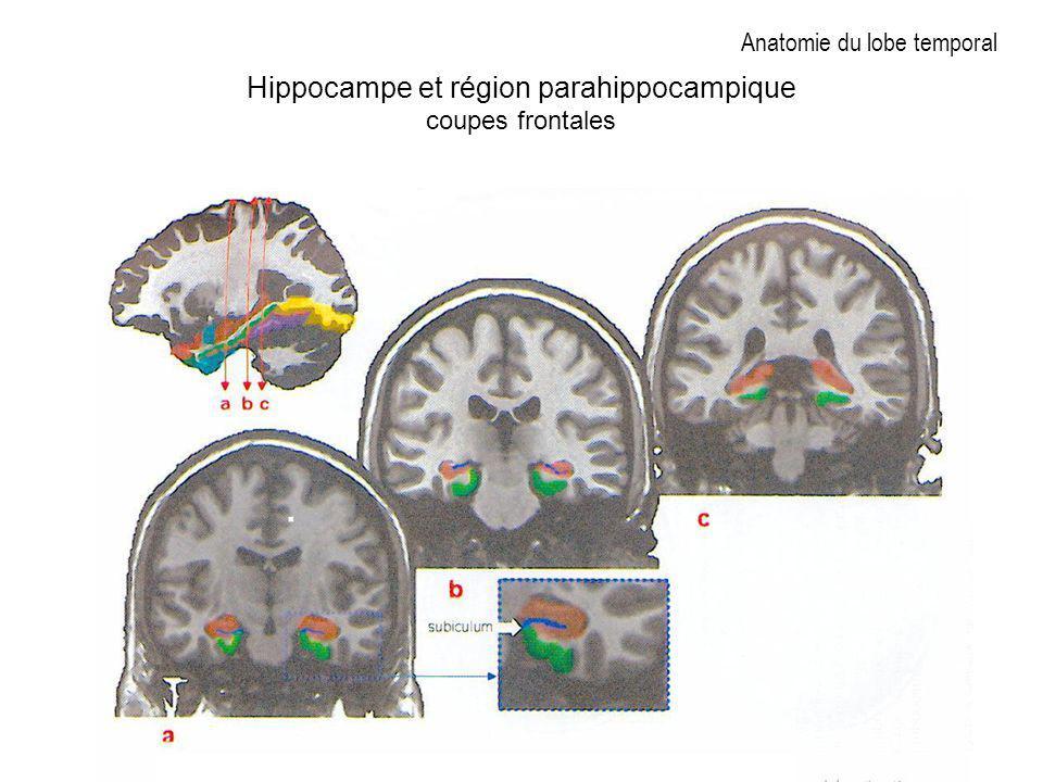 Anatomie du lobe temporal Hippocampe et région parahippocampique coupes frontales