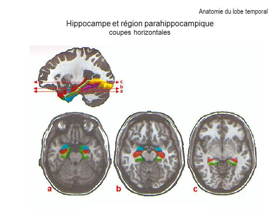 Anatomie du lobe temporal Hippocampe et région parahippocampique coupes horizontales