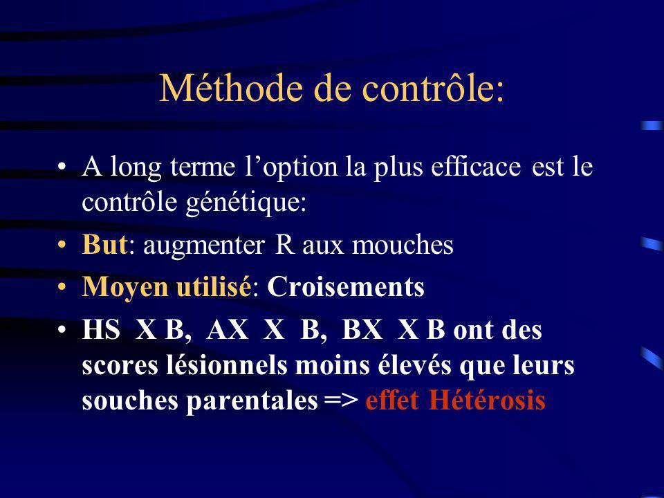 Méthode de contrôle: A long terme loption la plus efficace est le contrôle génétique: But: augmenter R aux mouches Moyen utilisé: Croisements HS X B,