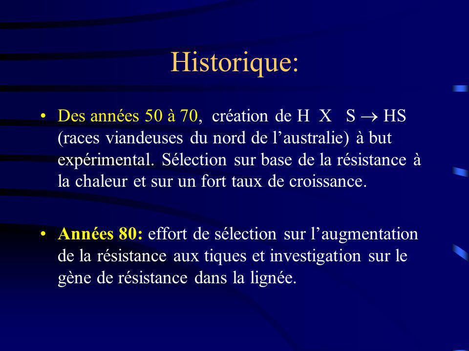 Historique: Des années 50 à 70, création de H X S HS (races viandeuses du nord de laustralie) à but expérimental. Sélection sur base de la résistance