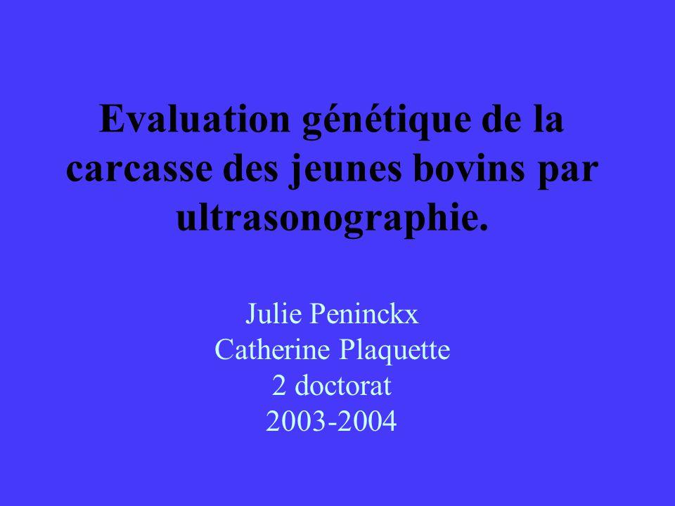 Evaluation génétique de la carcasse des jeunes bovins par ultrasonographie. Julie Peninckx Catherine Plaquette 2 doctorat 2003-2004