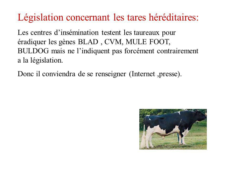 Législation concernant les tares héréditaires: Les centres dinsémination testent les taureaux pour éradiquer les gènes BLAD, CVM, MULE FOOT, BULDOG ma