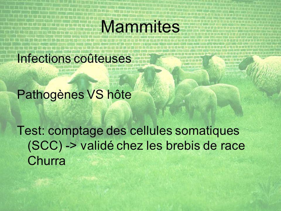 Mammites Infections coûteuses Pathogènes VS hôte Test: comptage des cellules somatiques (SCC) -> validé chez les brebis de race Churra