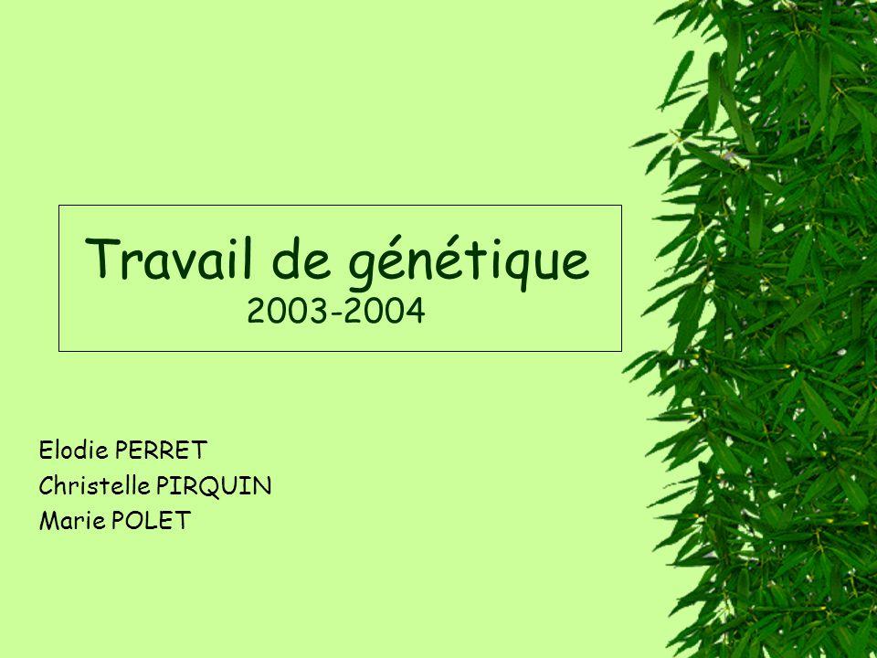 Travail de génétique 2003-2004 Elodie PERRET Christelle PIRQUIN Marie POLET