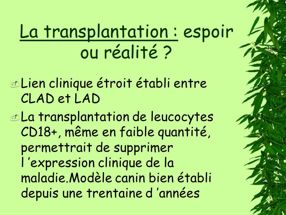 La transplantation : espoir ou réalité .