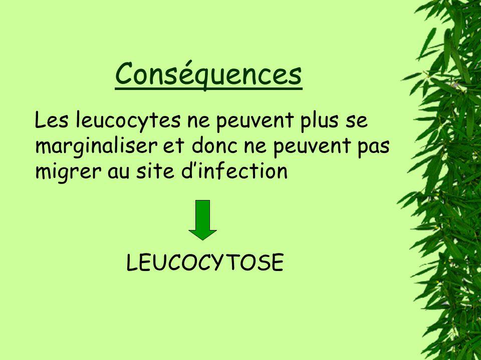 Conséquences Les leucocytes ne peuvent plus se marginaliser et donc ne peuvent pas migrer au site dinfection LEUCOCYTOSE