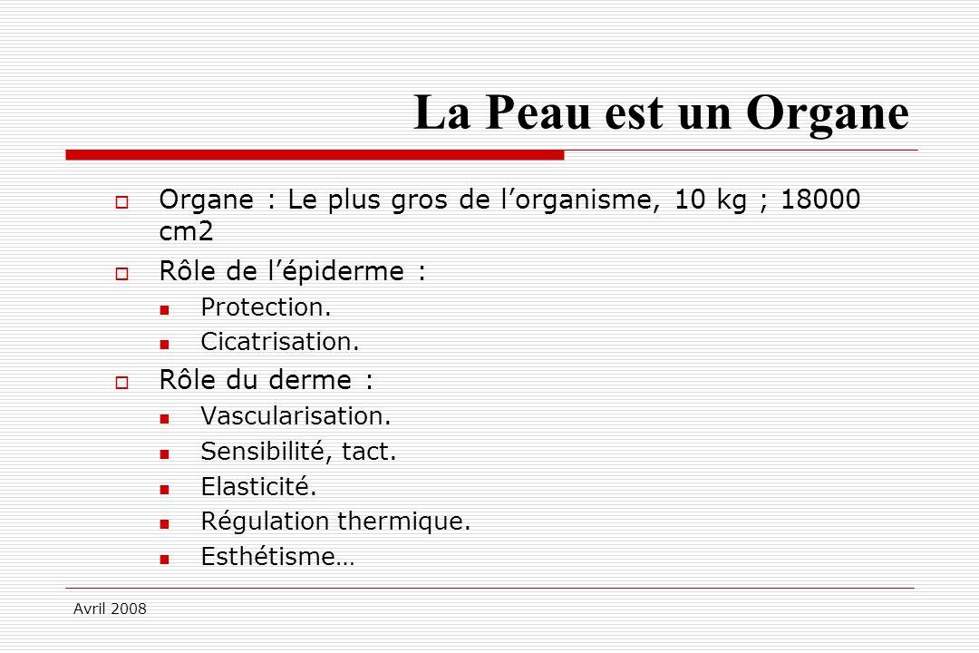 Avril 2008 La Peau est un Organe Organe : Le plus gros de lorganisme, 10 kg ; 18000 cm2 Rôle de lépiderme : Protection. Cicatrisation. Rôle du derme :