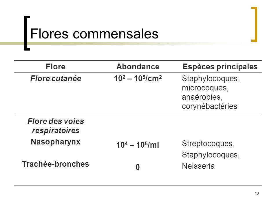 13 Flores commensales Streptocoques, Staphylocoques, Neisseria 10 4 – 10 5 /ml 0 Flore des voies respiratoires Nasopharynx Trachée-bronches Staphylocoques, microcoques, anaérobies, corynébactéries 10 2 – 10 5 /cm 2 Flore cutanée Espèces principalesAbondanceFlore