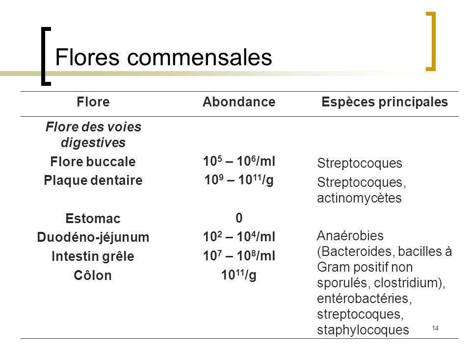14 Flores commensales Streptocoques Streptocoques, actinomycètes Anaérobies (Bacteroides, bacilles à Gram positif non sporulés, clostridium), entérobactéries, streptocoques, staphylocoques 10 5 – 10 6 /ml 10 9 – 10 11 /g 0 10 2 – 10 4 /ml 10 7 – 10 8 /ml 10 11 /g Flore des voies digestives Flore buccale Plaque dentaire Estomac Duodéno-jéjunum Intestin grêle Côlon Espèces principalesAbondanceFlore