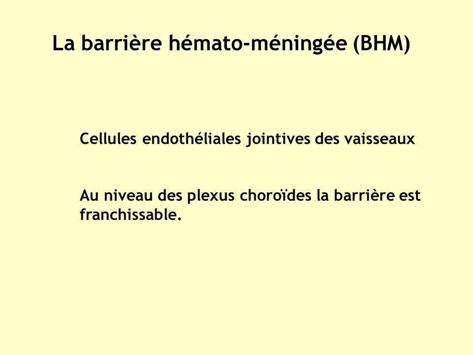 La barrière hémato-méningée (BHM) Cellules endothéliales jointives des vaisseaux Au niveau des plexus choroïdes la barrière est franchissable.