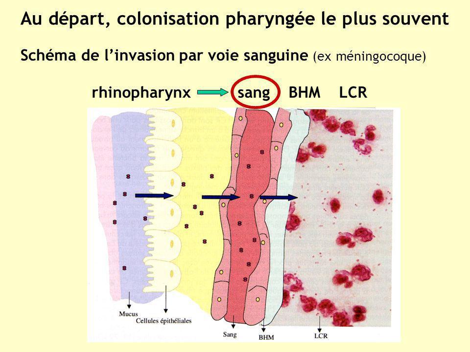 rhinopharynx sang BHM LCR Schéma de linvasion par voie sanguine (ex méningocoque) Au départ, colonisation pharyngée le plus souvent